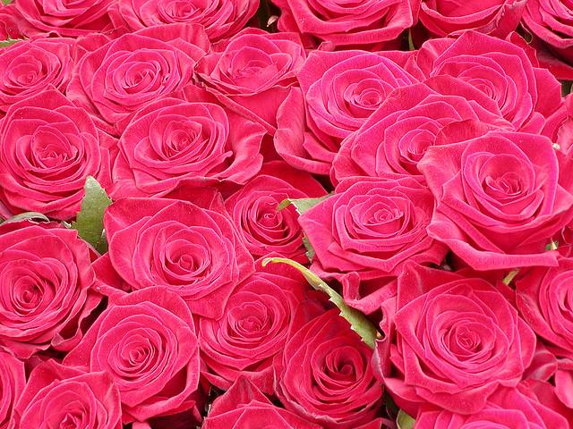 rosas ecuador