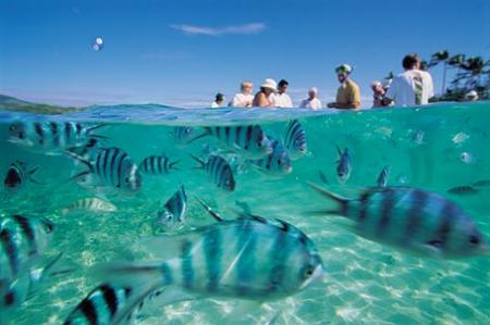 peces en fiyi