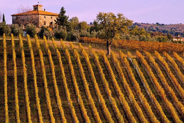 viña italiana Maremma