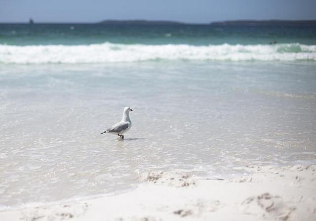 la playa mas blanca del mundo