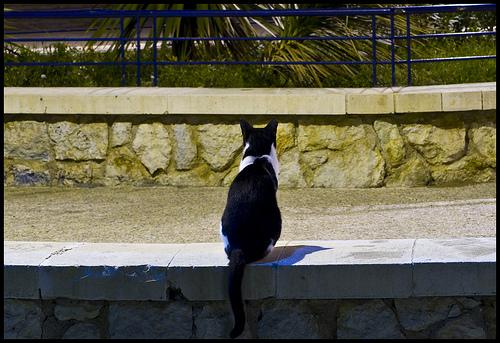 mascotas en Malaga